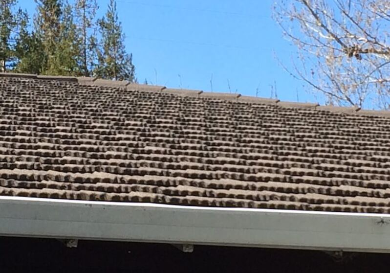 roofing provider in San Jose, CA